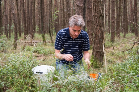 Man picking blueberries in the forest photo