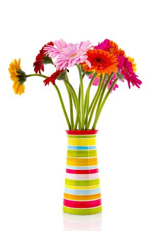 白い背景に分離されたストライプの花瓶でカラフルなガーバー花