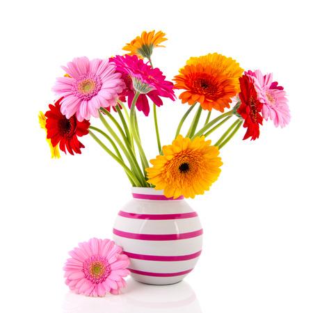 色とりどりのガーバー花の花瓶に白い背景に分離されたピンクのストライプ 写真素材