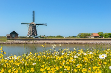 Windmill and wild flowers at Dutch wadden island Texel photo
