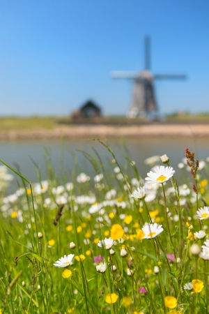 wadden: Windmill and wild flowers at Dutch wadden island Texel with focus on flowers