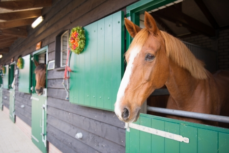 soest: Row horses looking over the stable doors Stock Photo