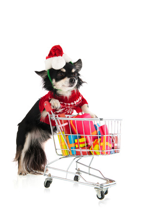 Dog with shopping cart and many colorful presents photo