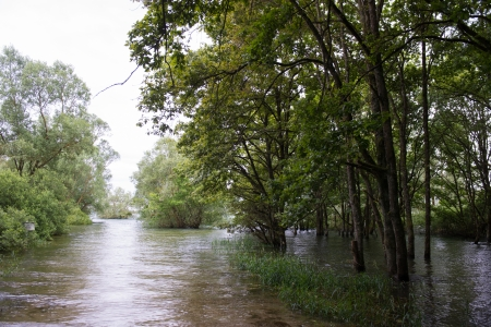submersion: flooding water with trees
