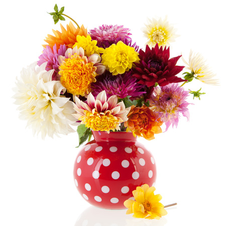 Bouquet Dahlias in red vase isolated over white background photo