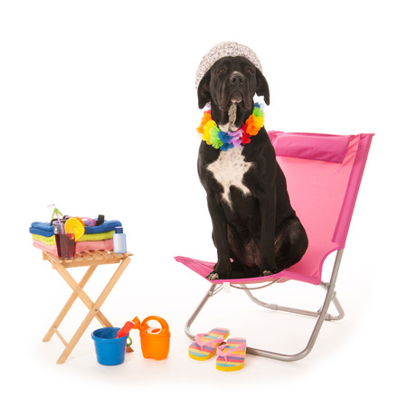Dog with sunglasses on chair at the beach isolated over white background photo
