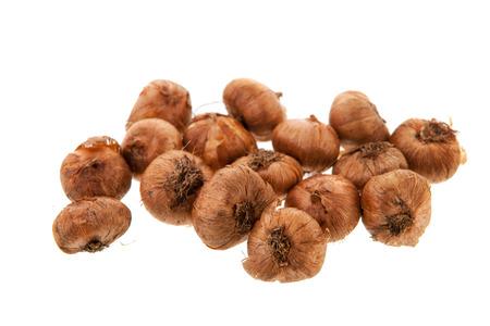 croci: Crocuses flower bulbs isolated over white background Stock Photo