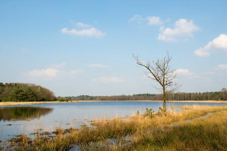 veld: Tree in Dutch winter landscape in Leersumse veld