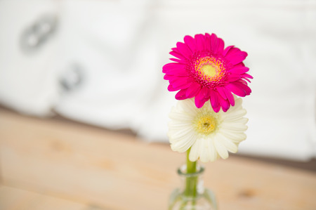 Glass vase with Gerber flowers in interior photo