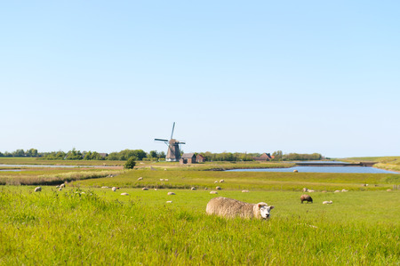 Landscape Dutch wadden island Texel with water of the nature Waagejot, windmill and typical sheep photo