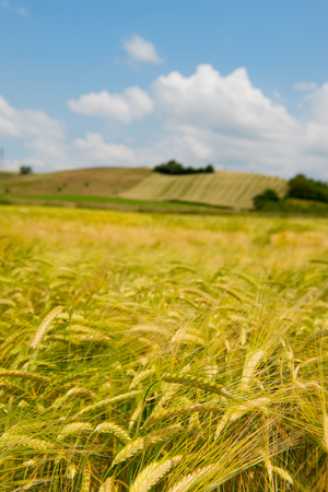 Agricultural landscape in French Drome photo