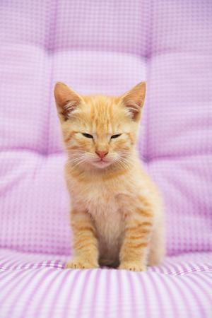 Litte red kitten on pink checkered background photo