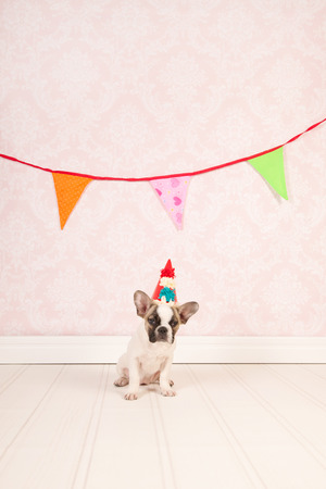 Little dog is having a party  photo