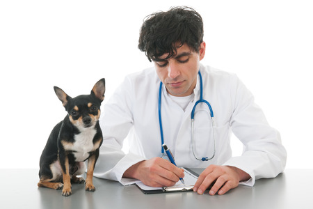 Handsome veterinarian with dog isolated over white background photo