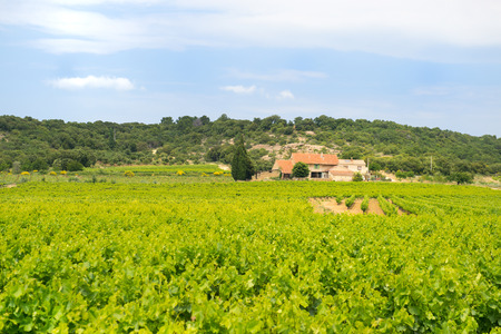 Vineyard in South France with house in the middle photo