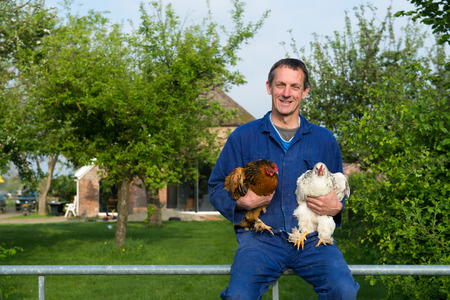 old farmer: Farmer outdoor is carrying chickens