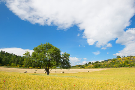 Rural agricultural French landscape with grain and grass rolls photo