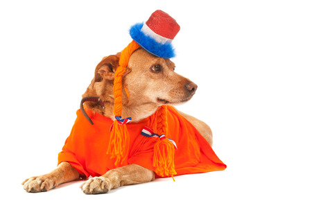 Dutch dog in orange with flags as soccer supporter photo