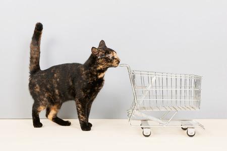 Tortoiseshell cat with empty shopping cart photo