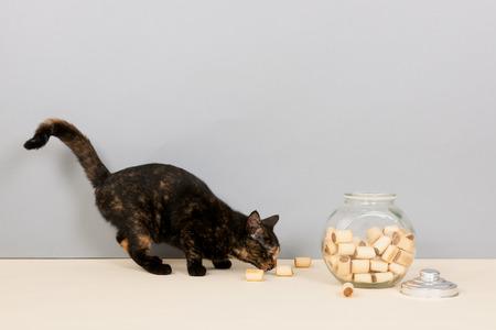 tortoiseshell: Tortoiseshell cat with bowl cookies in studio