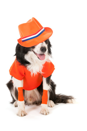 Dog as Dutch soccer fan isolated over white background photo