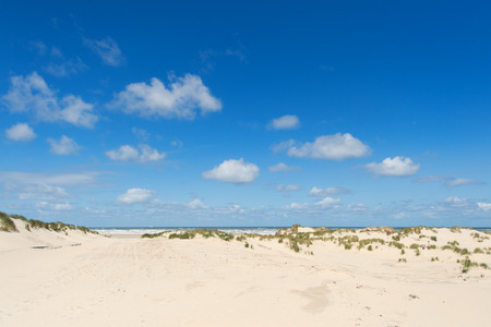 Sand dune at beach of Dutch wadden island Terschelling