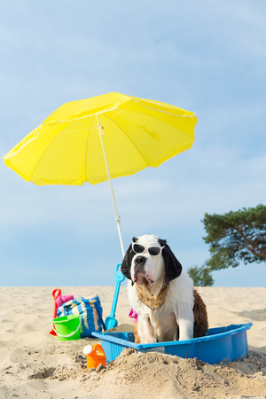 Funny dog is having a cooling down with water and parasol at the beach in the summer Stock Photo