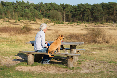 plassen: landscape with man and dog at the wooden bench