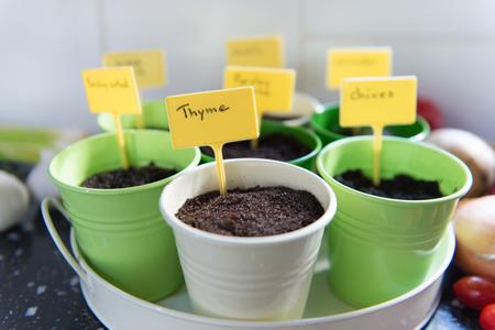 Sowing herbs indoor in pots