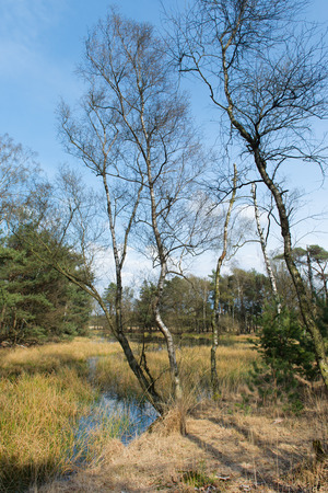 plassen: Nature landscape with swamp and trees