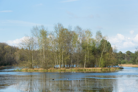 plassen: Landscape with natural lake, island and trees in spring Stock Photo