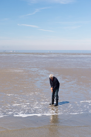 wadden: Man in Dutch wadden sea fishing on shell fishes Stock Photo