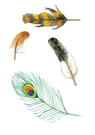 pavo: Several hand painted feathers from different birds