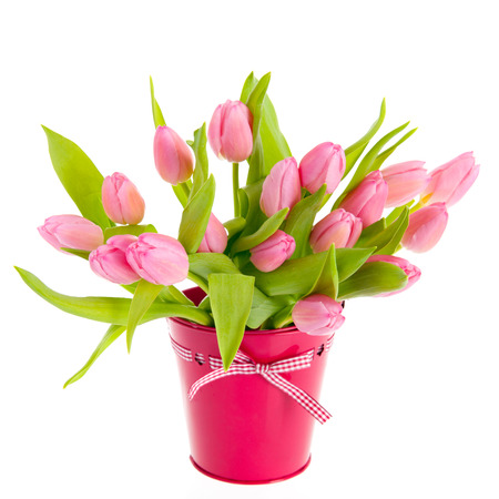 dutch typical: Pink and white tulips in bucket isolated over white background Stock Photo