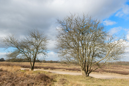 moorland: winter in Dutch landscape with moorland