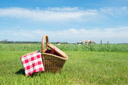 Picnic basket in grass outdoor in front of livestock cows photo