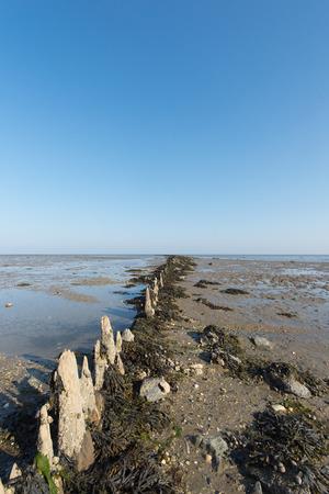 wadden: Wadden sea at the island Terschelling in Holland