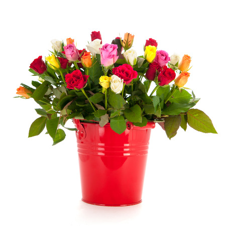 Bouquet mixed roses in red bucket isolated over white background photo