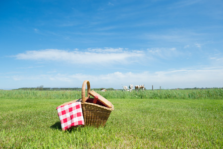 cow grass: Picnic basket in grass outdoor in front of livestock cows