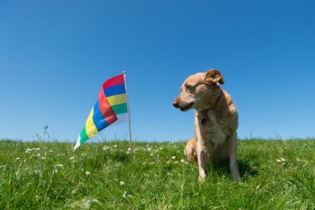 wadden: Brown cross breed dog laying in grass at Dutch wadden island Terschelling