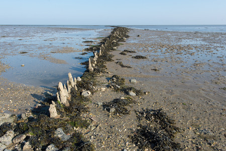 the wadden sea: Shallow mudflat in Dutch wadden sea at Terschelling Stock Photo