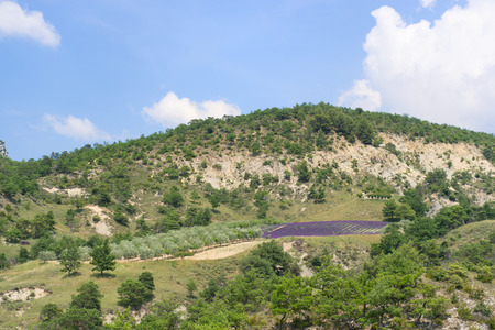 lavande: Nature landscape in the French Drome with blooming lavender