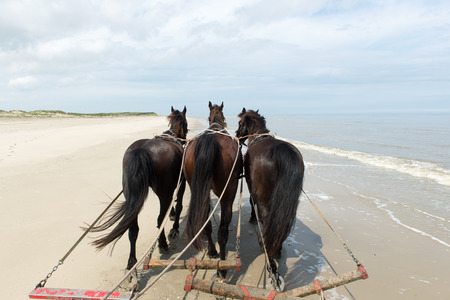 horse pull: Horses pulling tilt car at the beach from Dutch Terschelling