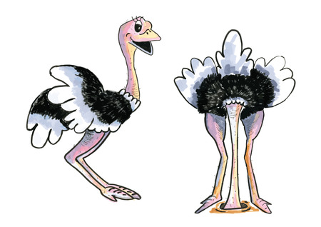 Cartoon of hand drawn Ostriches isolated over white background Vector
