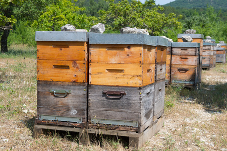 hives: Many bee hives outdoor in orchard Stock Photo