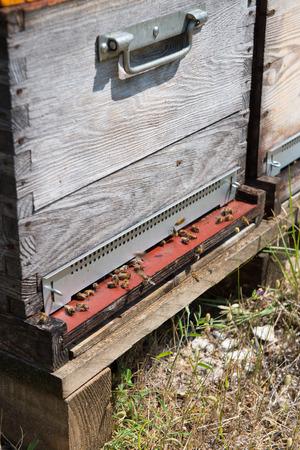 hives: Many bee hives outdoor Stock Photo