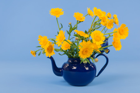 yellow tea pot: Bouquet yellow flowers in teapot on blue background Stock Photo