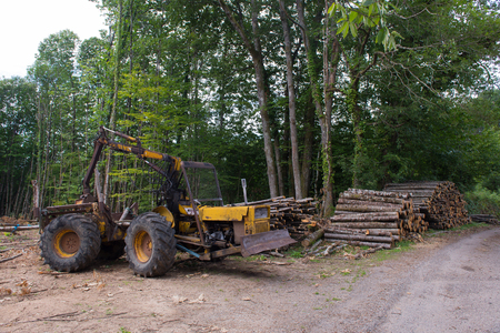 forestry: working in the forest for forestry