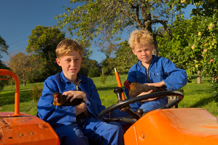 coverall: Farm boys with chickens riding on orange tractor Stock Photo