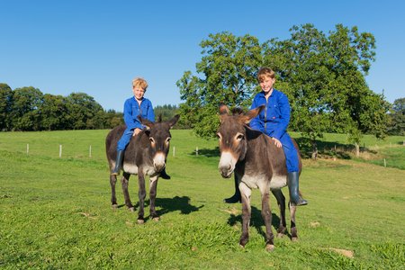 animals together: Farm boys riding on their donkeys